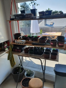 jardin au début