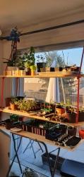 jardin avec rayon de soleil du matin 1