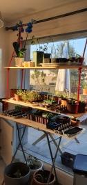 jardin avec rayon de soleil du matin 2