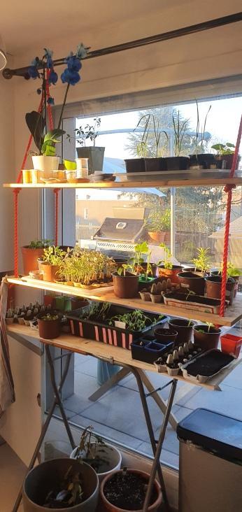 jardin avec rayon de soleil du matin 0